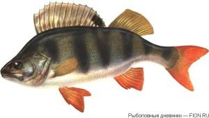 рыбалка_на_окуня