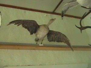 птица5
