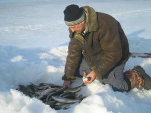 Хранение рыбы 2012.