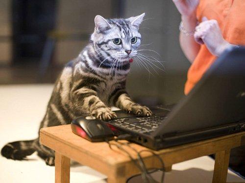 Удаленная_работа_через_Интернет