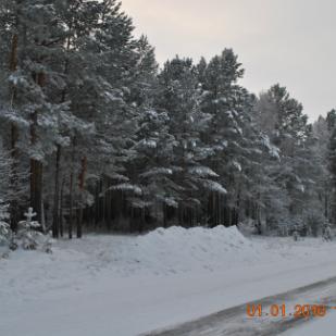 Саянск, новогодня\ий лес