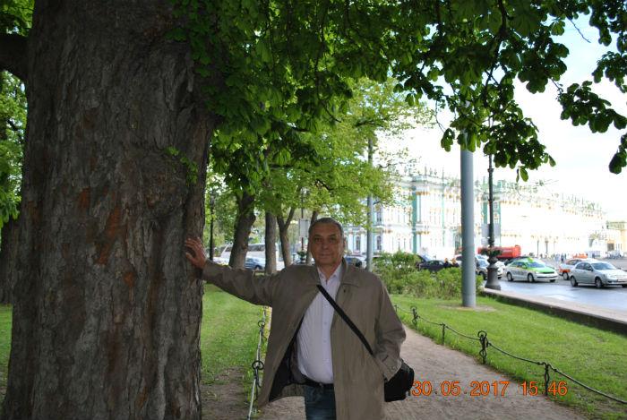 Деревья у дворцовой площади