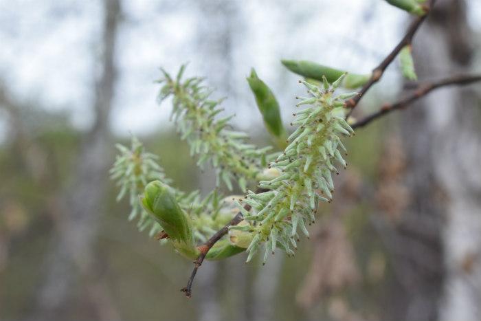 деревья в апреле