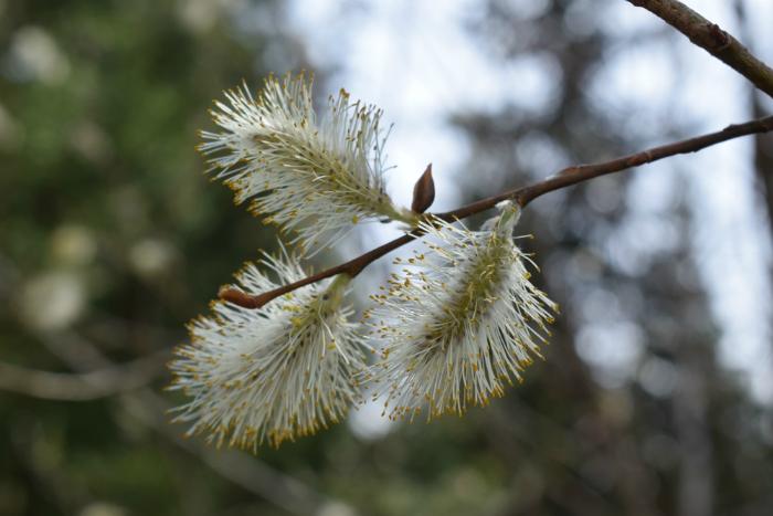 ранняя весна в сибири
